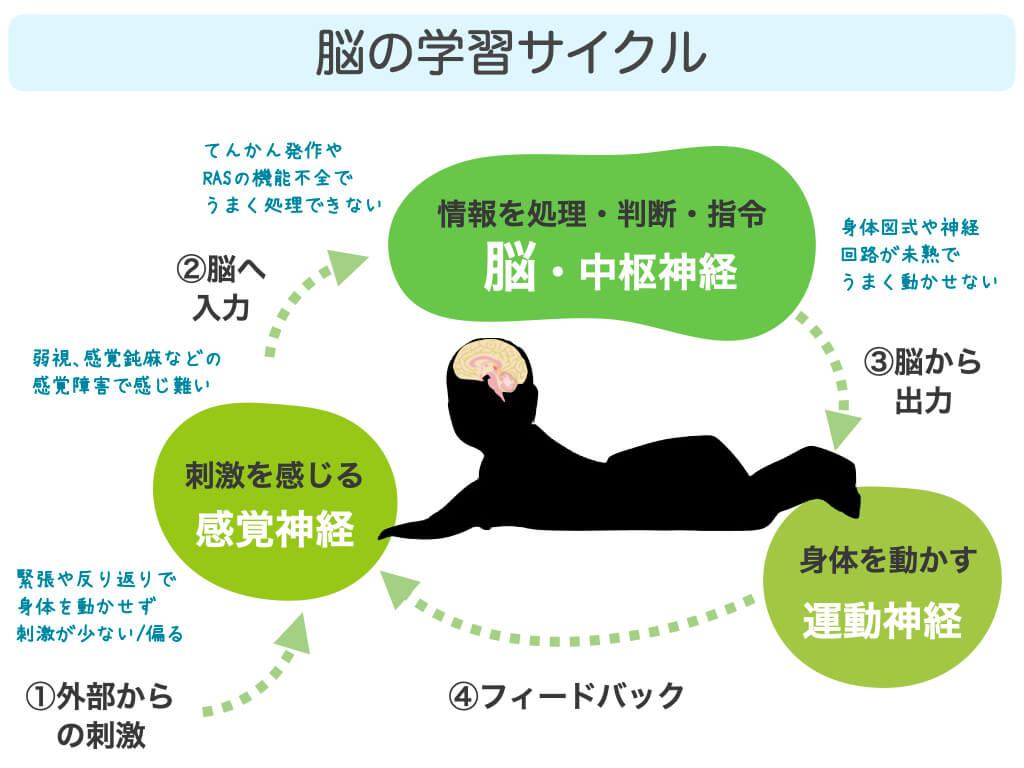 脳の学習サイクル